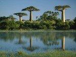 Мадагаскар-баобаби